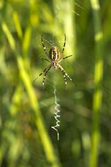 Spinne im Herbstlicht