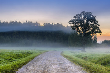 Old road among mist at dawn, Latvia, Europe