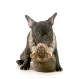 puppy love - 57852102