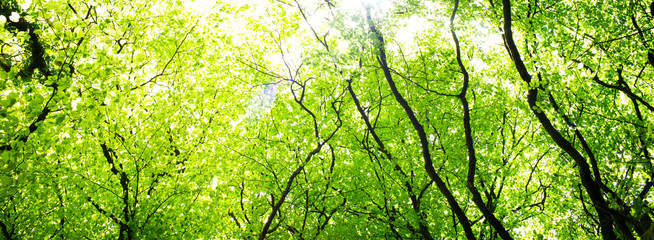 Woods of green trees