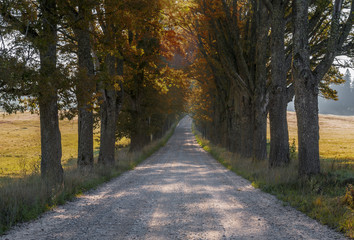 Old road among oak trees, Latvia, Europe