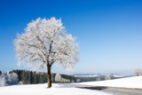 Frozen tree on winter landscape and blue sky