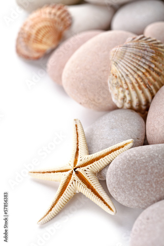pile of stones, shells and sea star closeup on white background