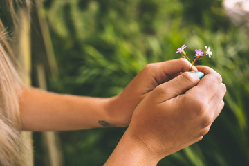 Close up of female hands holding small flower