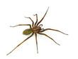 Hairy spider - 57860196