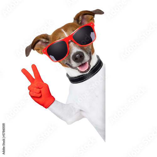 peace fingers dog