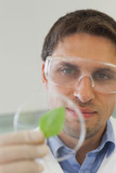 Concentrated male scientist looking at a petri dish containing a leaf