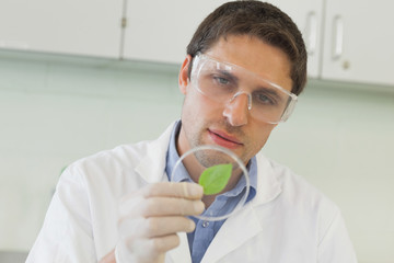 Young male scientist looking at a petri dish