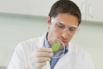 Attractive male scientist holding a petri dish