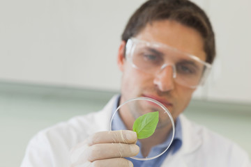 Handsome young scientist looking at a petri dish containing a leaf