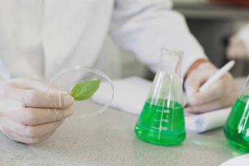 Close up of scientist holding a petri dish containing a leaf