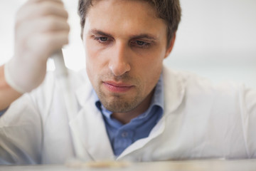 Young scientist using carefully a pipette