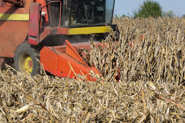 Combine harvester harvesting corn in field