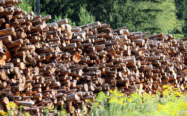 catasta di legno