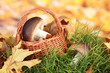 Mushrooms in wicker basket on grass on bright background