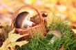 Mushrooms in wicker basket on grass on bright background