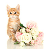 Cute little red kitten with roses isolated on white