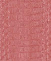 painted  snake skin