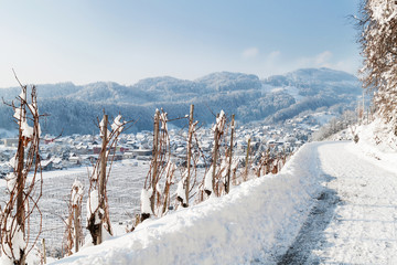 Rebstock im Winter