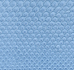 painted in blue snake skin close up