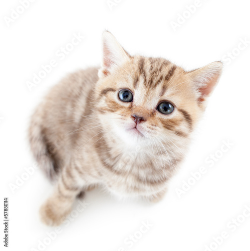 top view of cat kitten on white background