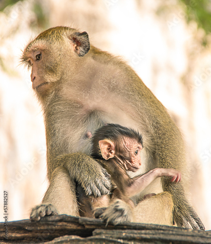 Monkey protecting the newborn Child