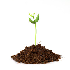 Seedling growing from soil on white
