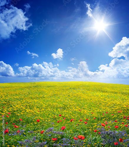 Plexiglas Lente yellow field in serene scene