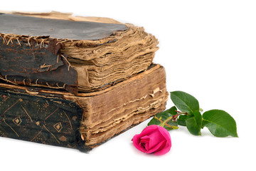 roses next to the historic books isolated