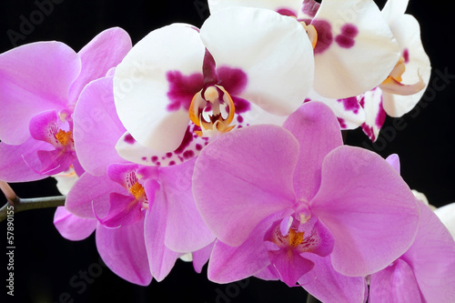 The beautiful orchid