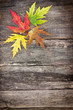 colored leaves on wooden board