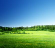 pole trawy i perfect sky
