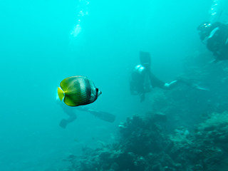 Butterflyfish and Scuba Divers, Bali