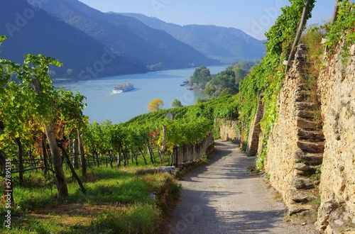 Foto op Plexiglas Rivier Wachau Weinberg - Wachau vineyard 15
