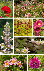 Collage Sommerblumen