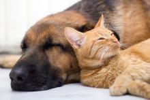 """Постер, картина, фотообои """"cat and dog sleeping together"""""""