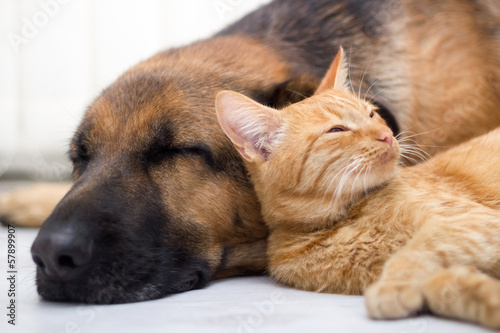 Poster cat and dog sleeping together
