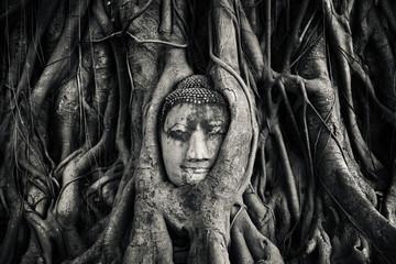 Tête de bouddha. Ayutthaya, Thaïlande.