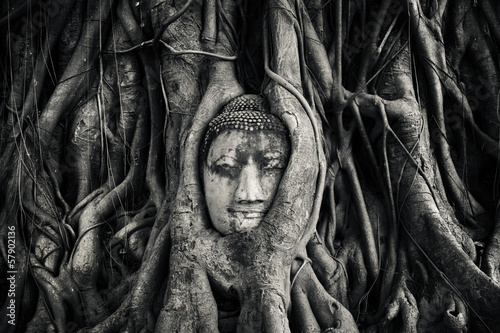 Naklejka Tête de bouddha. Ayutthaya, Thaïlande.