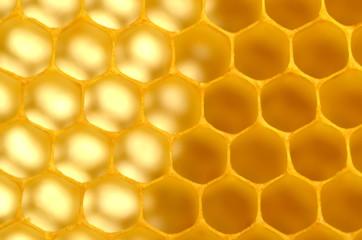plaster pszczeli