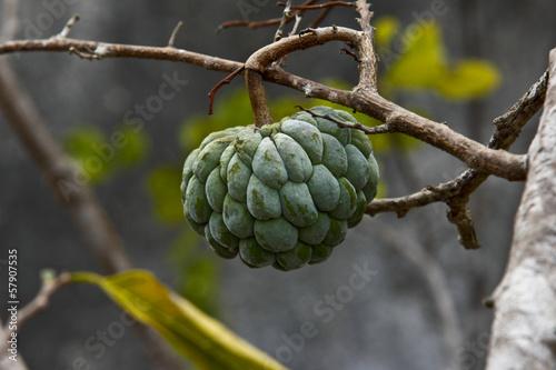 Brasile, vegetazione del Sertao