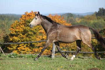 Nice mare on autumn pasturage
