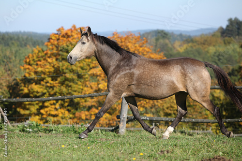 Nice mare on autumn pasturage