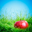 Apple on the grass