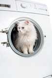 washing machine and cat