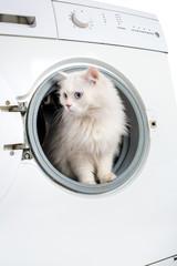 washing machine and cat