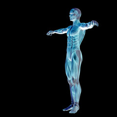 3D human man anatomy for health or medicine