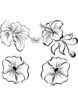 Vector stylized black and white flowers