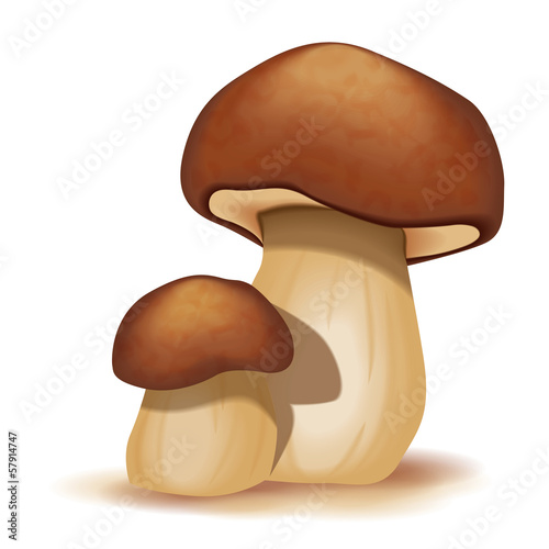 Two ceps isolated on a white background