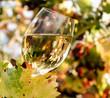 Weinglas mit Weißwein im herbstlichen Weingarten